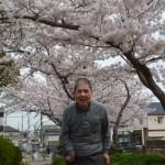 まごころ 春爛漫弁当~お花見ドライブ