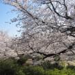 桜は満開天気も良く行楽日和でした!!