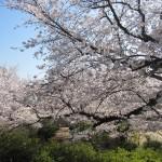 桜は満開絶好の花見日和の2日間!!!
